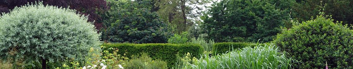 Bomen worden in diverse maten en soorten aangeboden op Tuinplantenwinkel.nl