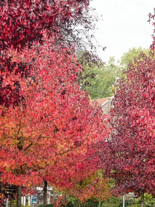 In deze tuin geven de bladeren van diverse soorten bomen een ware pracht aan herfstkleuren