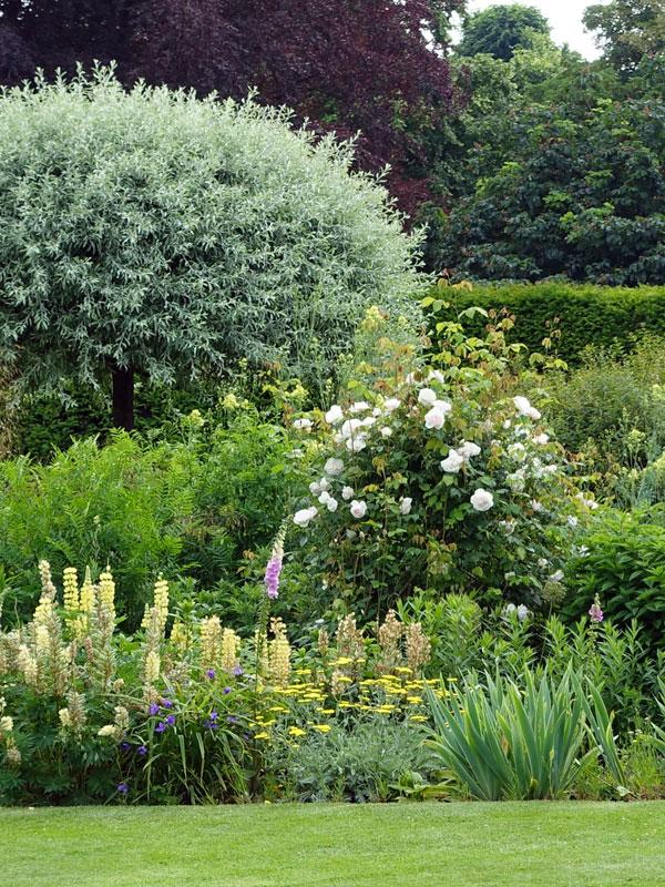 Verschillende maten en soorten bomen geven een diversiteit aan kleuren, vormen en hoogtes in uw tuin