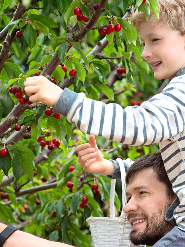 Het plukken en proeven van de vruchten van fruitbomen is een feest voor jong en oud