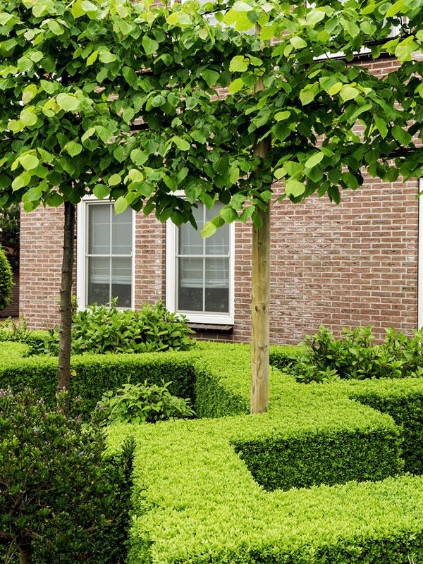 Ook in de moderne tuinarchitectuur wordt dankbaar gebruik gemaakt van de buxus