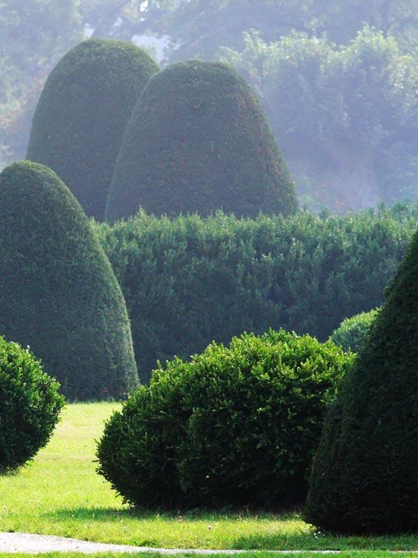 Hagen en vormgeknipte planten vormen een contrast met lossere begroeiing