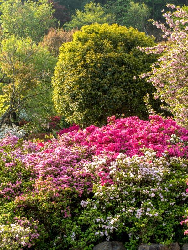Door verschillende soorten te combineren ontstaat een kleurrijk palet aan bloemen
