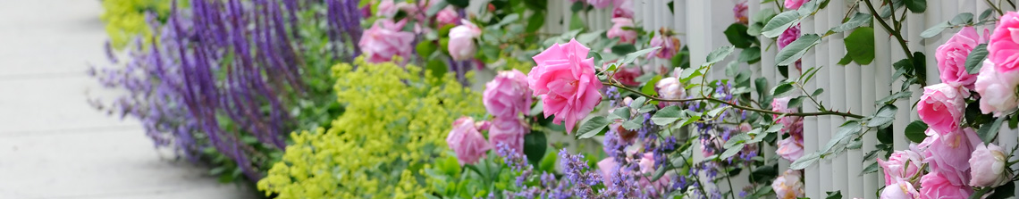 Struikrozen zijn in ontelbare kleuren verkrijgbaar en bloeien over het algemeen de gehele zomer