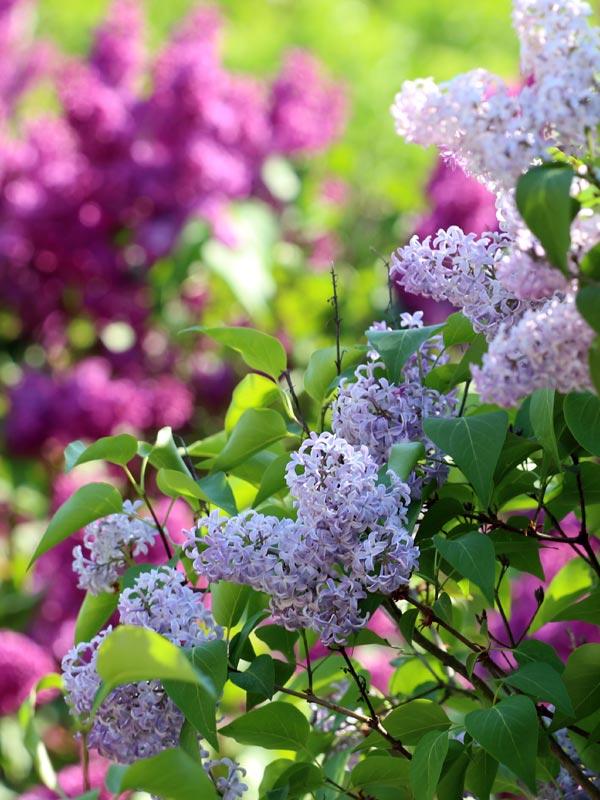 Van dichtbij zijn de bloemen niet alleen prachtig om te zien maar kunt u ook genieten van een heerlijke geur