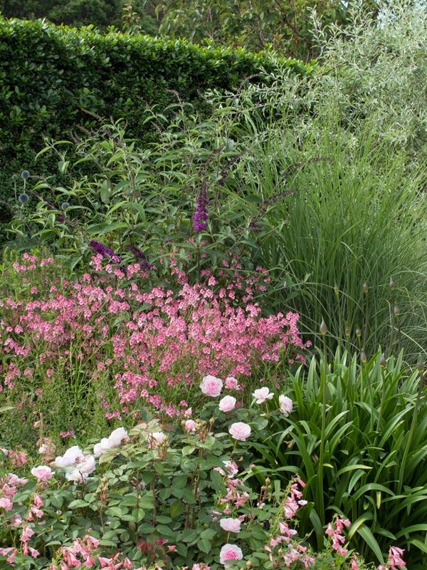 Vlinderstruiken komen het beste tot hun recht in een bloemrijke border