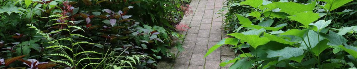 Bladplanten combineren door verschillende tinten tegen elkaar te zetten. Zo komt de border tot leven met planten zonder dat er bloemen aan te pas komen