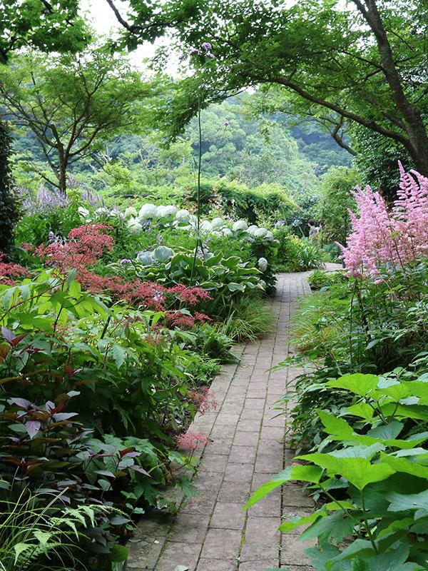 In deze schaduwborder zijn allerlei planten toegepast met verschillende bladtinten en soms zelfs bloemen