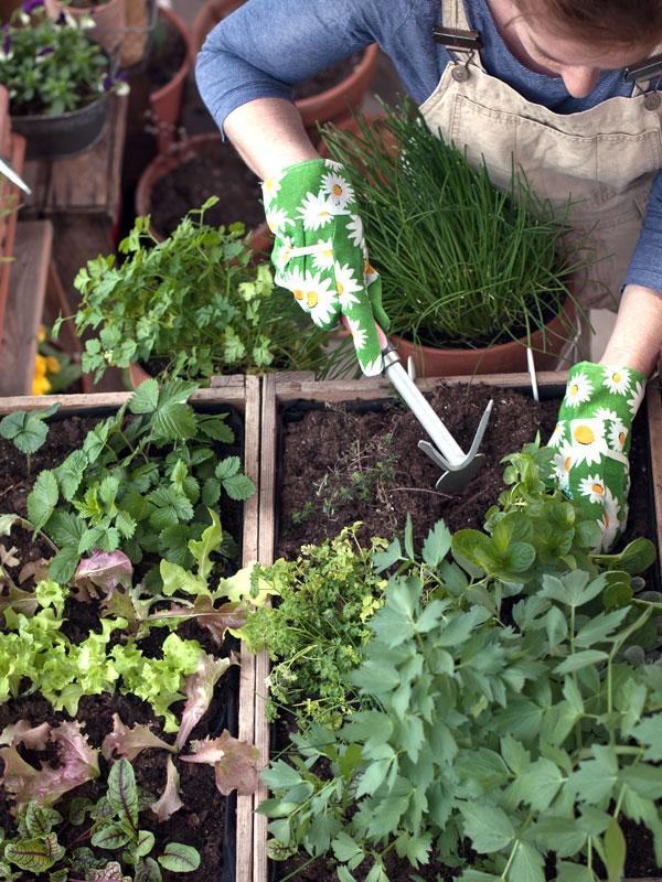 In een bak komen kruidenplanten ook prima tot hun recht