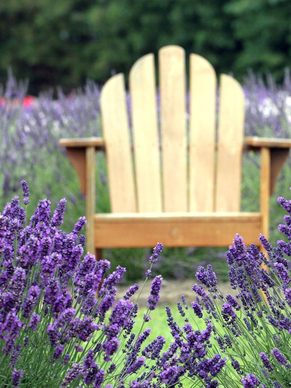 Tussen de lavendel waan je jezelf bijna in Zuid-Frankrijk