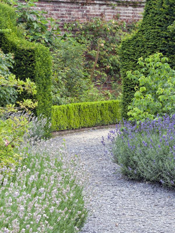 Lavendel zorgt langs het pad voor een mooie overgang naar de borders
