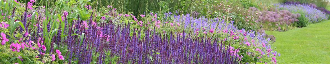 Vaste planten laten zich eindeloos combineren, bijvoorbeeld in deze vasteplanten border met salvia