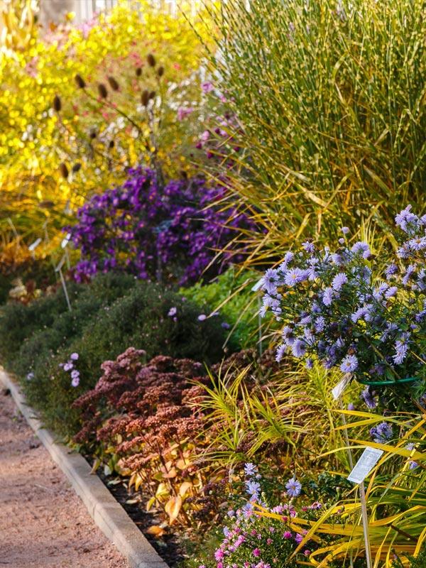 Ook aan het einde van het seizoen in de herfst zorgen vaste planten voor kleur