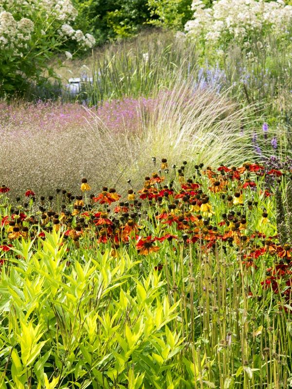 Vaste planten zorgen het hele jaar door voor kleur in de tuin