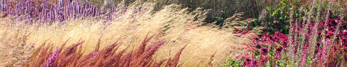 Siergrassen geven de tuin een natuurlijke uitstraling en vallen door hun fijne structuur goed op