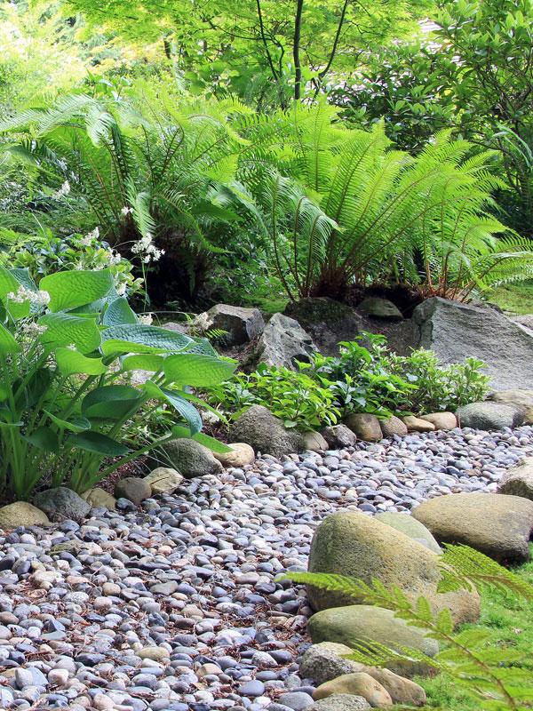 In deze tuin zijn verschillende varens gecombineerd voor een sprookjesachtig uiterlijk